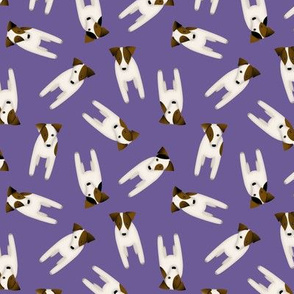 Parson / Jack Russell Terriers with cute head tilt / Small / Purple