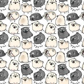 Pug Poses - white
