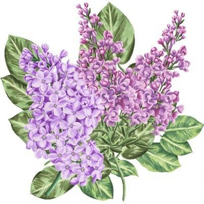 Red and Purple Lilacs