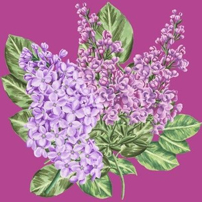 Purple Hand Drawn Lilacs on Wine.