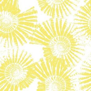 Yellow Nautilus Shell