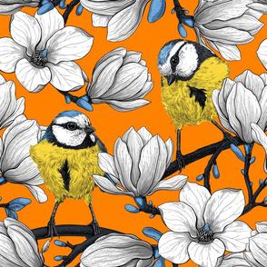 Spring time on orange