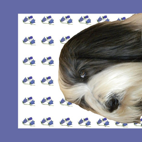 Bearded Collie Tea Towel Animal Portrait
