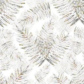 Debs Ferns on White Background