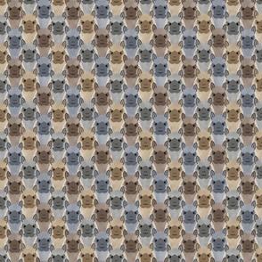 Small Alpaca pride - bold earthtones