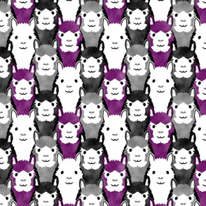 Alpaca pride - ace faces