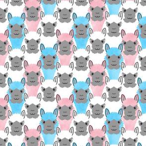 Alpaca pride - white pink blue