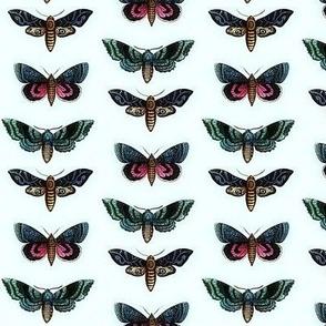 Coloured moths