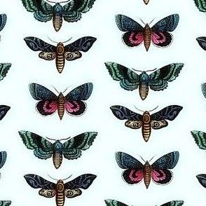 Coloured_moths