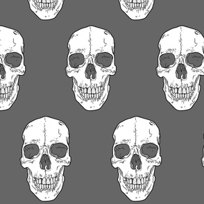 Human Skull // Large // Grey