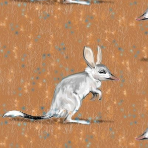 Bilby in brush
