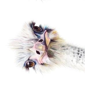 OstrichPortrait