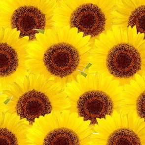 Jumbo Blooming Sunflower Sunny Yellow Floral Pattern
