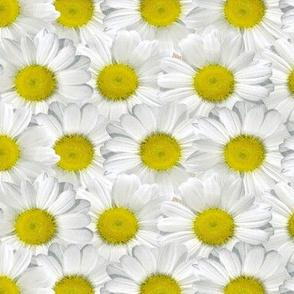 Jumbo Daisy Dots Yellow and White