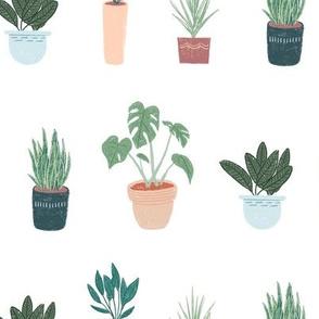 House Plants White