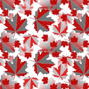 maple leaves gr