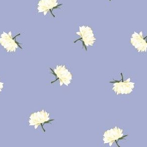 white peonies toss on lilac