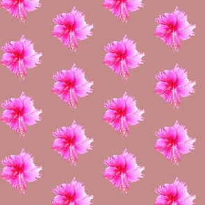 Dusky Pink Apple Blossom