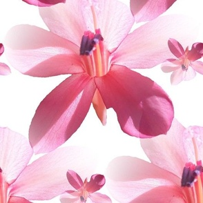 Coral Wildflowers