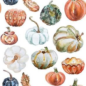 Organic Pumpkins // White