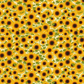 Over the Field of Sunflowers