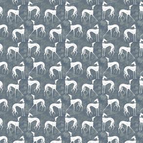 White chalk greyhound on grey