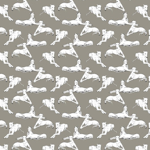 White Greyhounds on gray