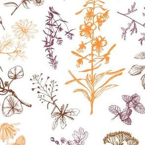 Siberian summer herbs