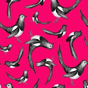 Magpies - Magenta