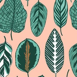 calathea leaves