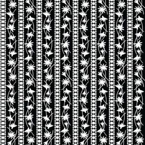 Rudbeckia Black White Stripe 2-01