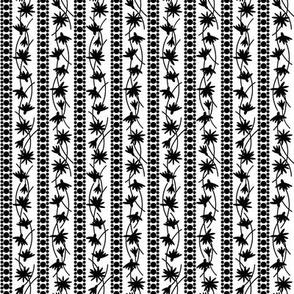 Rudbeckia White Black Stripe 2-01