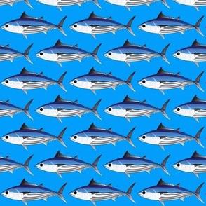 Skipjack Tuna on sea blue