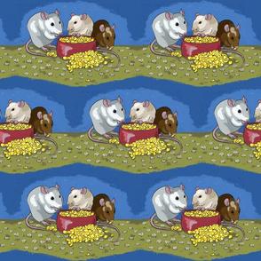 Fancy pet rats munching on corn -smaller