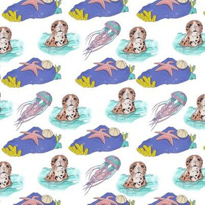 Sealife and Seals