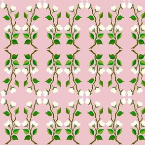 Jasmine on pink background