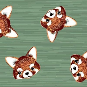 red panda faces t