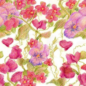 Pink Sweet Pea Pansy