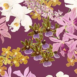 Botanist's Orchids on Merlot 150