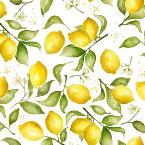 Lemon Blossoms, Medium