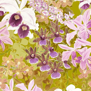 Botanist's Orchids II on Olive 150