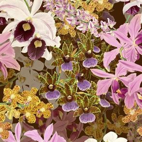Botanist's Orchids II on Raisin 150
