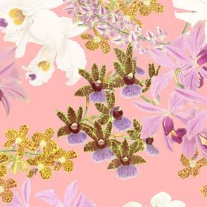 Botanist's Orchids on Blush 150