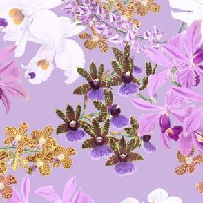 Botanist's Orchids on Lavender 150