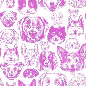 dogs - purple