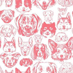 dogs - salmon