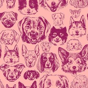 dogs - raspberry
