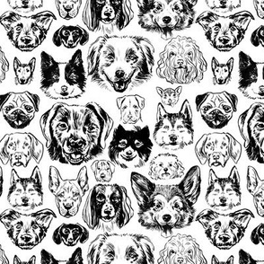 dogs - small black + white