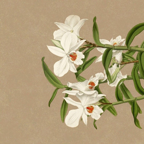 Dendrobium Jamesianum Tea Towel 150