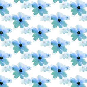 Blue Ranunculus